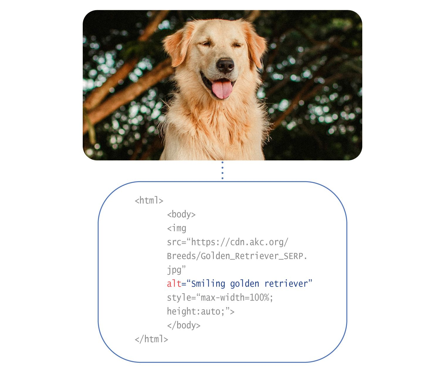 Image: An example of an alt tag in the code of a site. Above is a photo of a happy dog, and below is the code showing the alt tag as 'smiling golden retriever.'